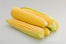 Kukuřice cukrová Damaun extra sladká