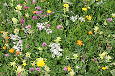 Směs lučních květin