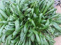 Asijská listová zelenina Mibuna